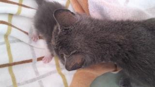 430保護猫 (2).JPG