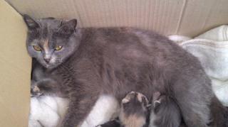 430保護猫 (4).JPG