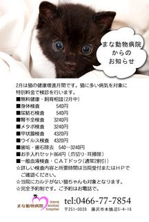 猫DM2015.jpg